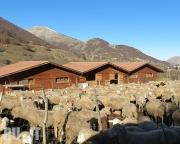 Ферма в Сканно