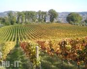 Винодельня в провинции Кьети