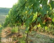 Винодельческое хозяйство в городе Джулианова (Giulianova)