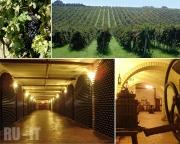 Винодельческое хозяйство в городе Ноччано (Nocciano)